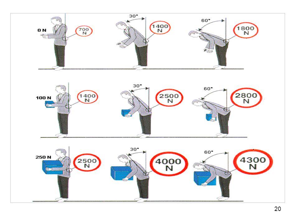 20 Druckkraft FL5 am Lenden-Kreuzbein-Übergang; Lendenwirbelsäulenbelastung in Abhängigkeit von Rumpfbeugung und Lastgewicht