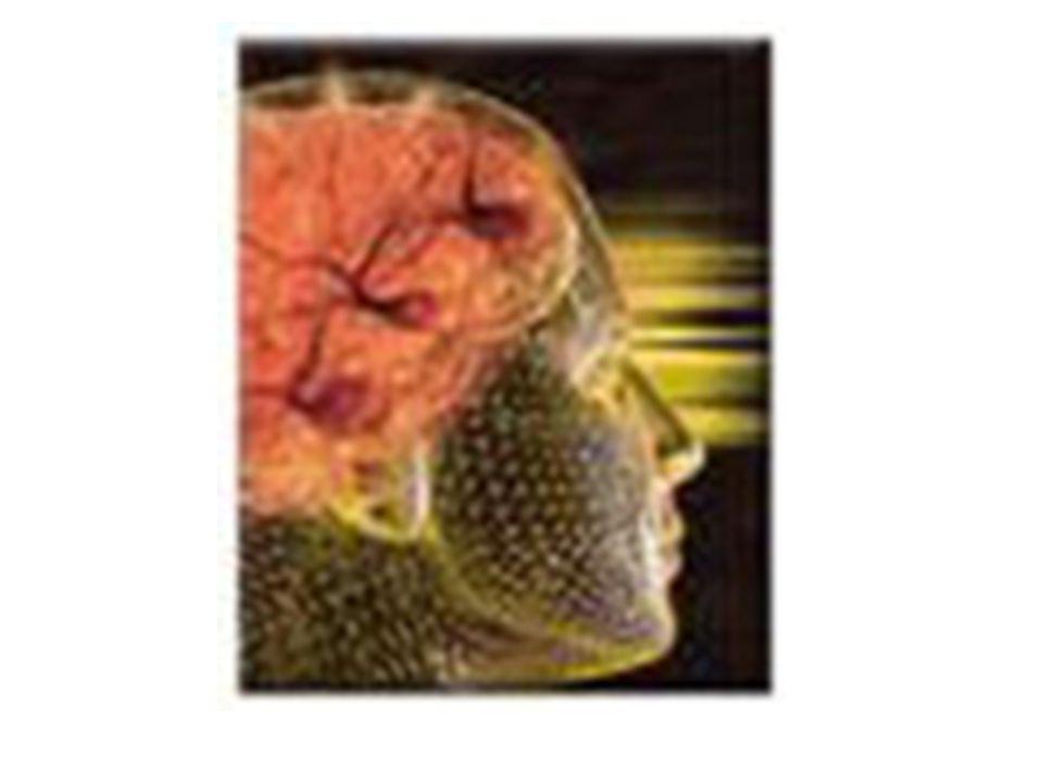 Normal Beyin Dokusunun Görünümü İntracranial Kanamalı Beyin Dokusunun Görünümü