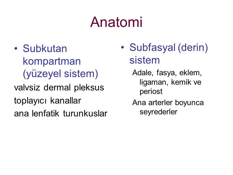 Anatomi Subkutan kompartman (yüzeyel sistem) valvsiz dermal pleksus toplayıcı kanallar ana lenfatik turunkuslar Subfasyal (derin) sistem Adale, fasya,