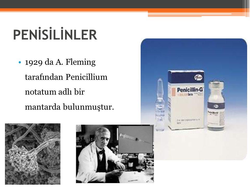 PENİSİLİNLER 1929 da A. Fleming tarafından Penicillium notatum adlı bir mantarda bulunmuştur.