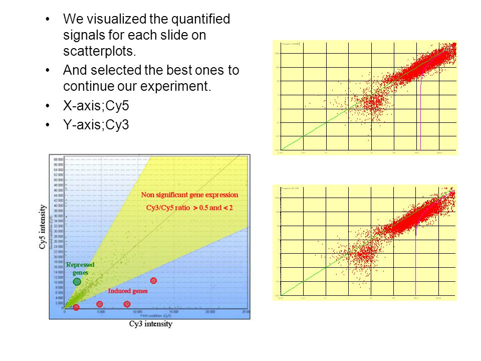 We visualized the quantified signals for each slide on scatterplots.
