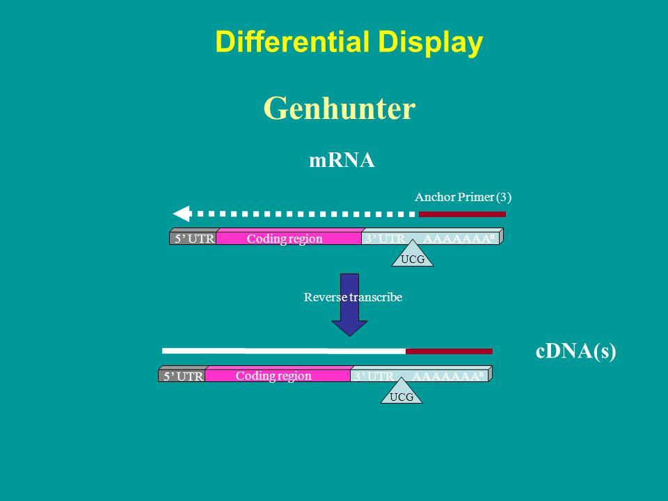 Coding region 5' UTR3' UTR UCG AAAAAAA n Coding region 5' UTR3' UTR UCG AAAAAAA n cDNA(s) Differential Display Genhunter Anchor Primer (3) Reverse tra