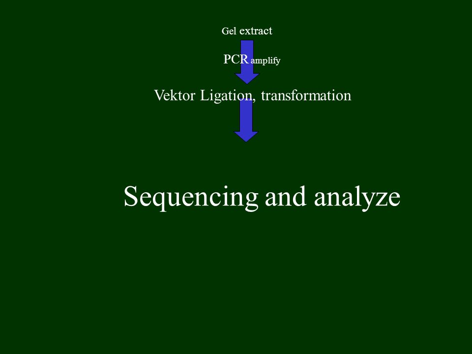 Gel extract PCR amplify Sequencing and analyze Vektor Ligation, transformation