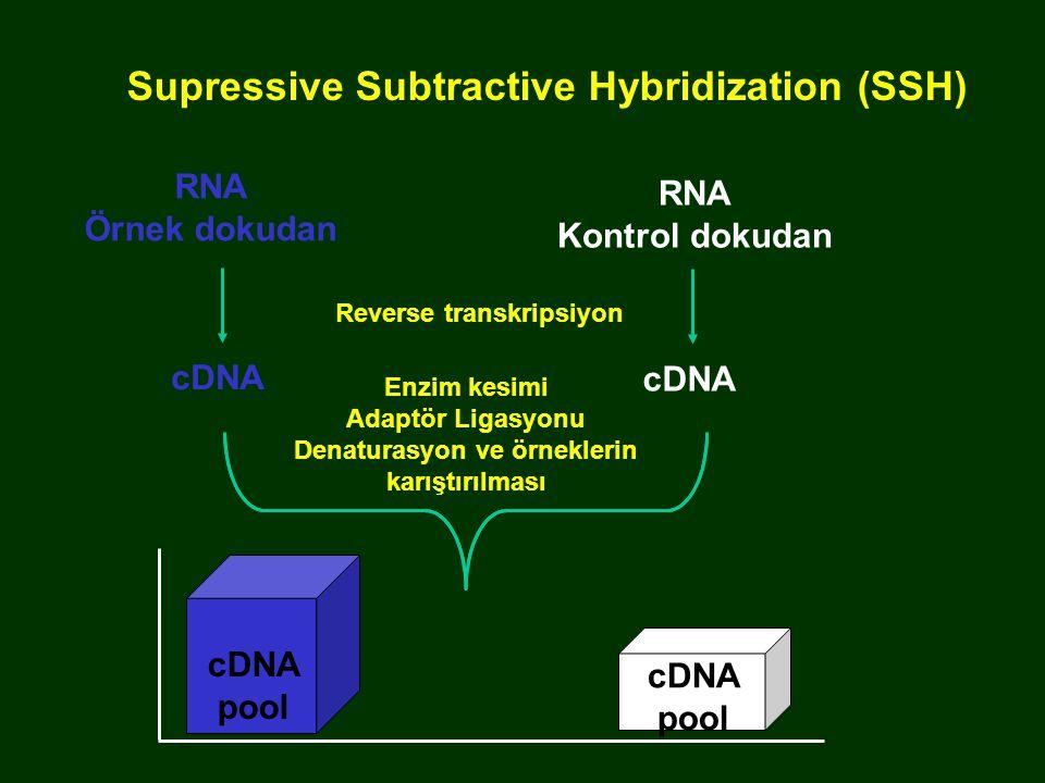 cDNA pool Supressive Subtractive Hybridization (SSH) cDNA Enzim kesimi Adaptör Ligasyonu Denaturasyon ve örneklerin karıştırılması RNA Örnek dokudan R