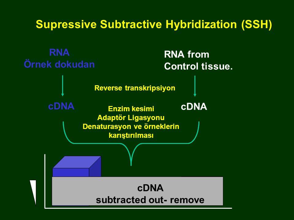 RNA from Control tissue. cDNA subtracted out- remove Supressive Subtractive Hybridization (SSH) cDNA Enzim kesimi Adaptör Ligasyonu Denaturasyon ve ör