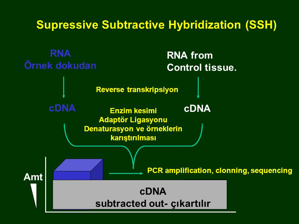 Amt PCR amplification, clonning, sequencing Supressive Subtractive Hybridization (SSH) RNA from Control tissue.