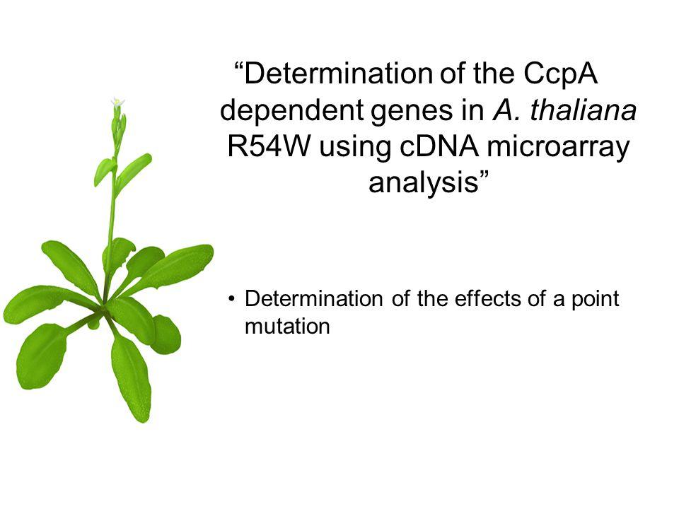 Visualization (genome2D)