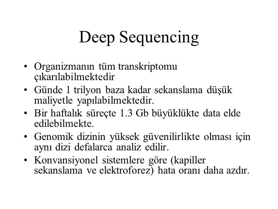 Deep Sequencing Organizmanın tüm transkriptomu çıkarılabilmektedir Günde 1 trilyon baza kadar sekanslama düşük maliyetle yapılabilmektedir. Bir haftal