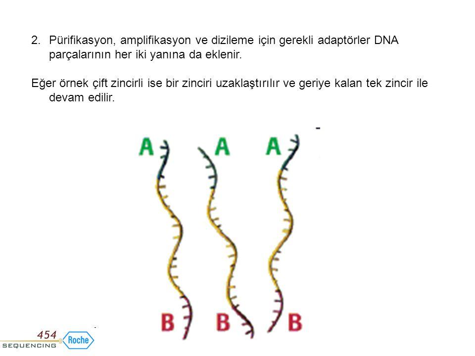 2.Pürifikasyon, amplifikasyon ve dizileme için gerekli adaptörler DNA parçalarının her iki yanına da eklenir. Eğer örnek çift zincirli ise bir zinciri
