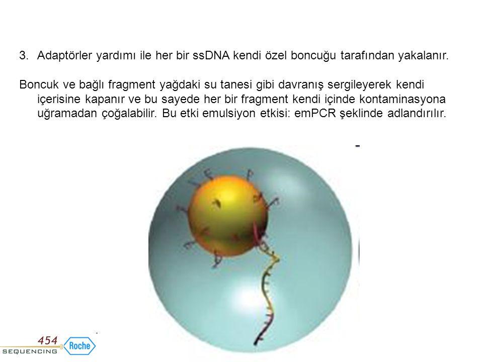 3.Adaptörler yardımı ile her bir ssDNA kendi özel boncuğu tarafından yakalanır. Boncuk ve bağlı fragment yağdaki su tanesi gibi davranış sergileyerek