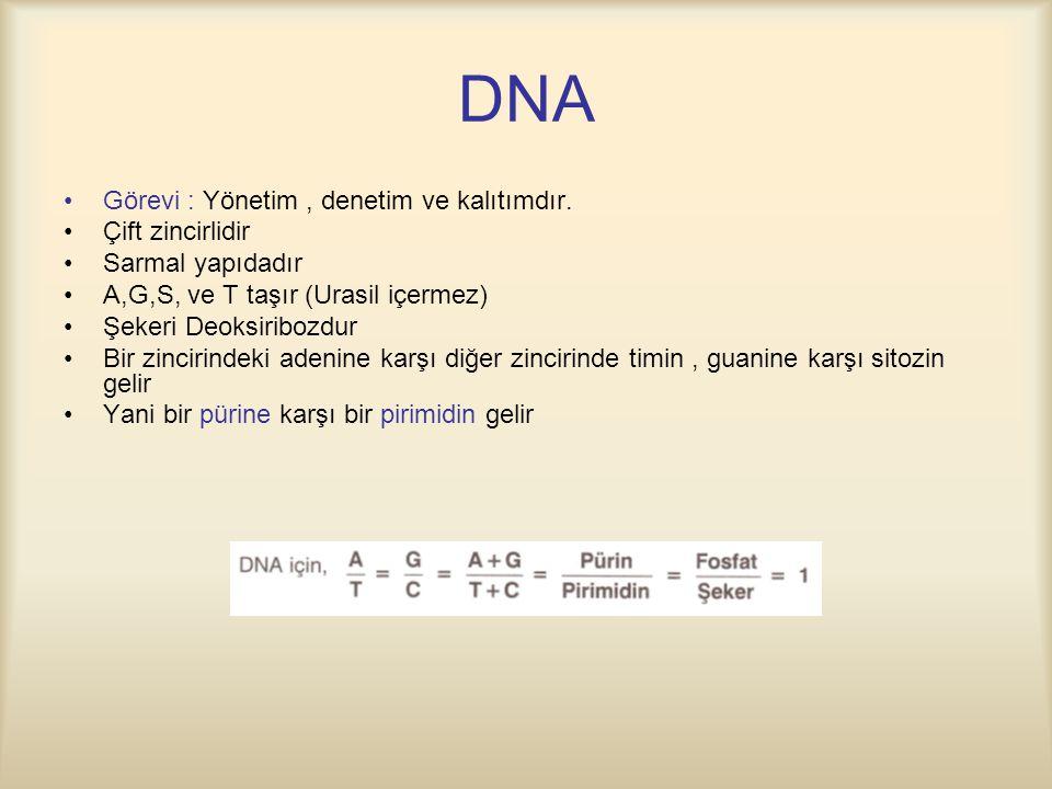 DNA Görevi : Yönetim, denetim ve kalıtımdır.