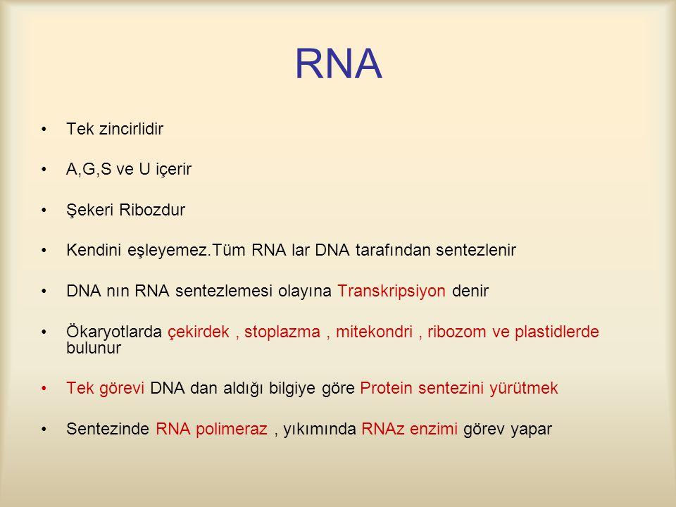 RNA Tek zincirlidir A,G,S ve U içerir Şekeri Ribozdur Kendini eşleyemez.Tüm RNA lar DNA tarafından sentezlenir DNA nın RNA sentezlemesi olayına Transkripsiyon denir Ökaryotlarda çekirdek, stoplazma, mitekondri, ribozom ve plastidlerde bulunur Tek görevi DNA dan aldığı bilgiye göre Protein sentezini yürütmek Sentezinde RNA polimeraz, yıkımında RNAz enzimi görev yapar