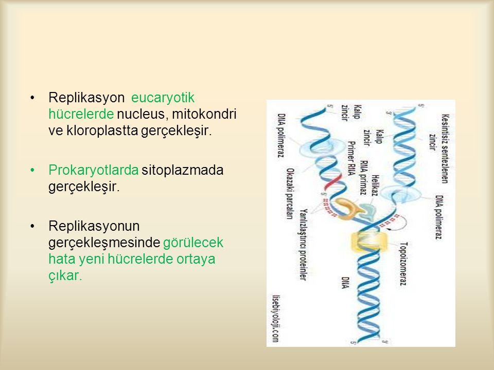 Replikasyon eucaryotik hücrelerde nucleus, mitokondri ve kloroplastta gerçekleşir.