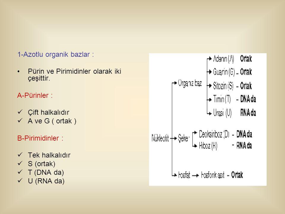 1-Azotlu organik bazlar : Pürin ve Pirimidinler olarak iki çeşittir.
