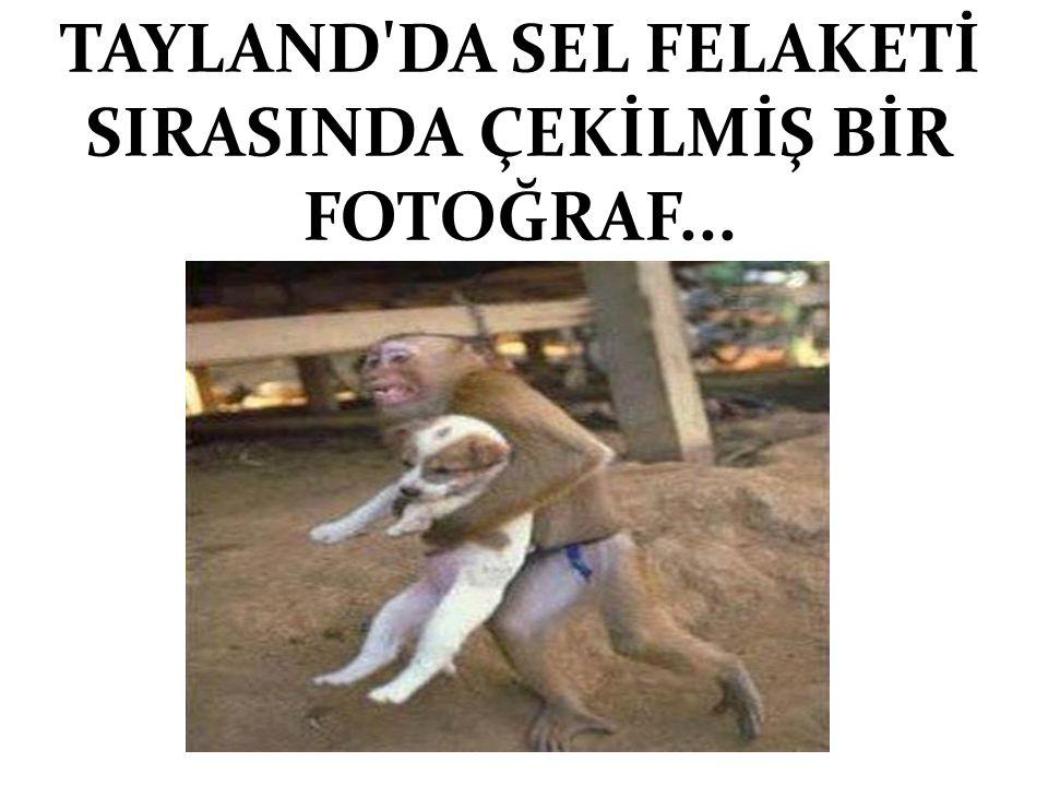 TAYLAND'DA SEL FELAKETİ SIRASINDA ÇEKİLMİŞ BİR FOTOĞRAF...