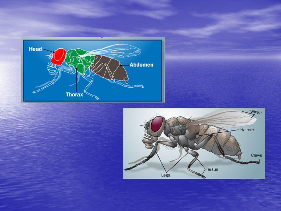 Kullanılan gruplar, insektisitler, sinerjist ve düşürücülerin karıştırılma oranları ve uygulama dozları I.Grup (Doz: mg.a.i.