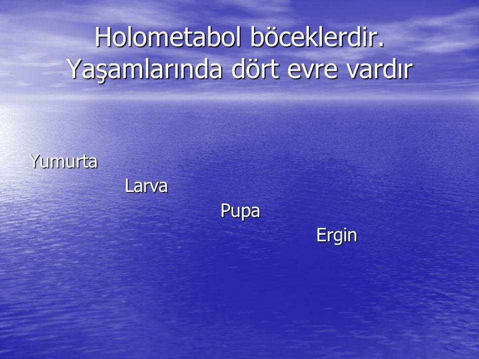 Deltamethrin formülasyonlarının karasinek populasyonları üzerindeki ölüm ve knock down etki yüzdeleri Biyolojik Etkinlik PopulasyonDeltamethrinDeltamethrin +PBO Deltamethrin +PBO +Tetramethrin X2X2 n%n%n% %KD a WHO c 601005210092100- Ankara7692941007110013.359* İstanbul8710.36810098100215.162* İzmir6412.56110072100162.595* Adana7838.511810093100155.708* %dx b WHO c 601005210092100- Ankara7697.494100711004.378 İstanbul8797.768100981003.846 İzmir6465.6611007210051.466* Adana7869.21181009310070.803* *p<0.01, a % KD: % knock down etki, b % dx: % ölüm, c Standart duyarlı populasyon