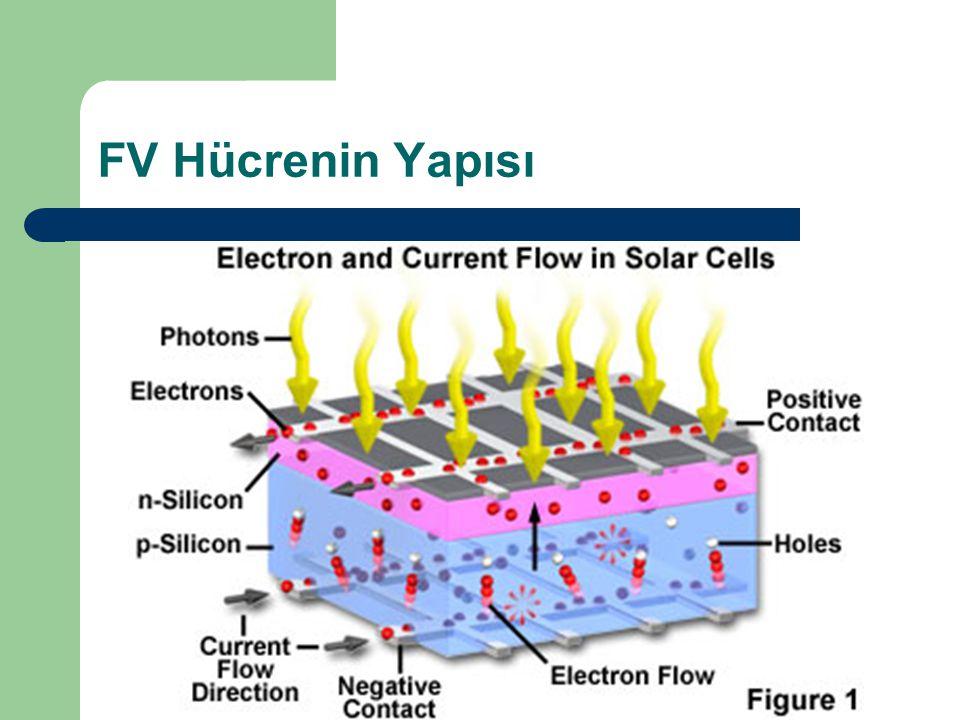 FV Hücrenin Yapısı