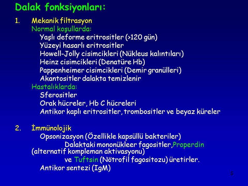 5 Dalak fonksiyonları: 1.Mekanik filtrasyon Normal koşullarda: Yaşlı deforme eritrositler (>120 gün) Yüzeyi hasarlı eritrositler Howell-Jolly cisimcik