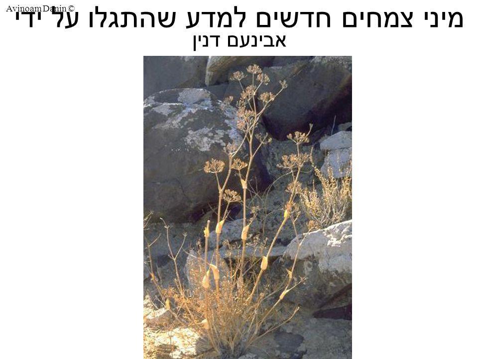 Avinoam Danin © מיני צמחים חדשים למדע שהתגלו על ידי אבינעם דנין