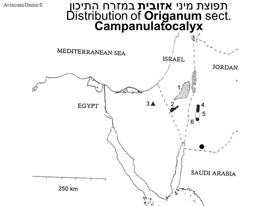 Avinoam Danin © תפוצת מיני אזובית במזרח התיכון Distribution of Origanum sect. Campanulatocalyx
