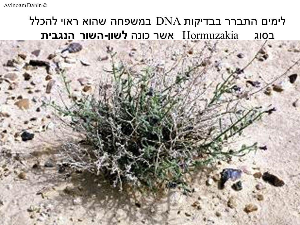 Avinoam Danin © לימים התברר בבדיקות DNA במשפחה שהוא ראוי להכלל בסוג Hormuzakia אשר כונה לשון - השור הנגבית