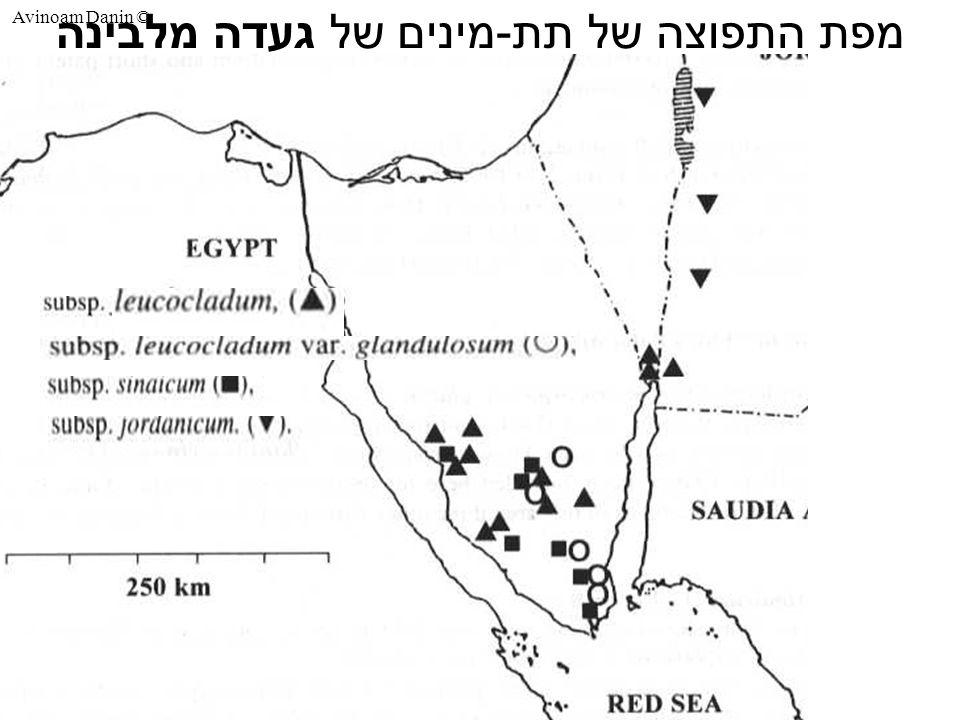 Avinoam Danin © מפת התפוצה של תת-מינים של געדה מלבינה