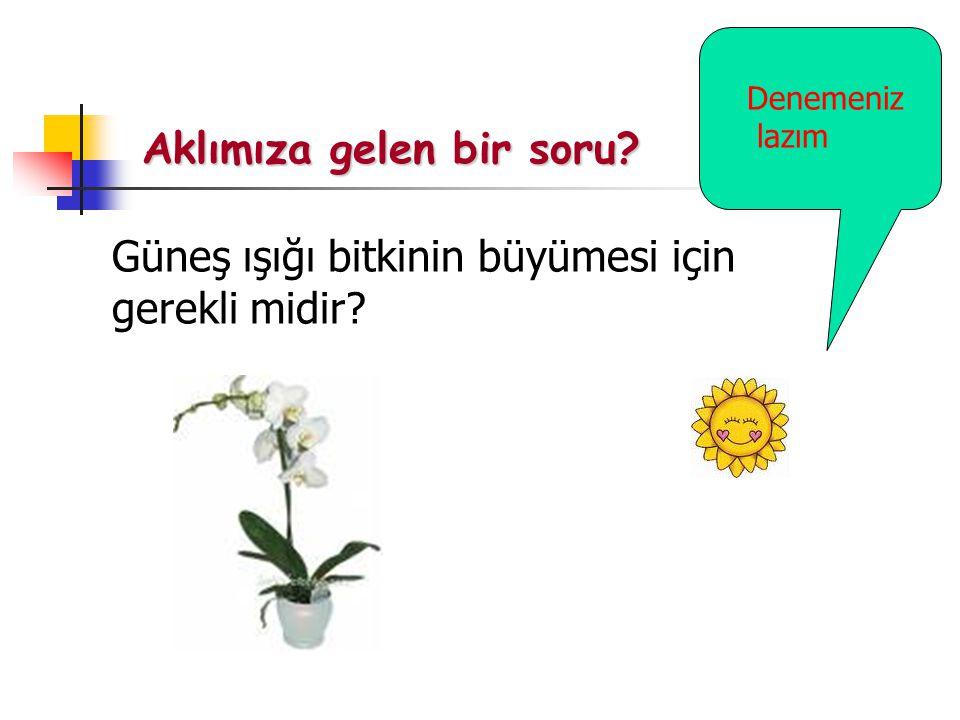Aklımıza gelen bir soru? Güneş ışığı bitkinin büyümesi için gerekli midir? Denemeniz lazım