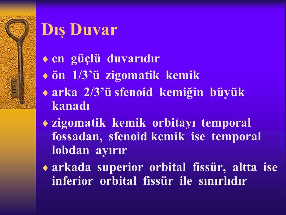 Dış Duvar  en güçlü duvarıdır  ön 1/3'ü zigomatik kemik  arka 2/3'ü sfenoid kemiğin büyük kanadı  zigomatik kemik orbitayı temporal fossadan, sfen