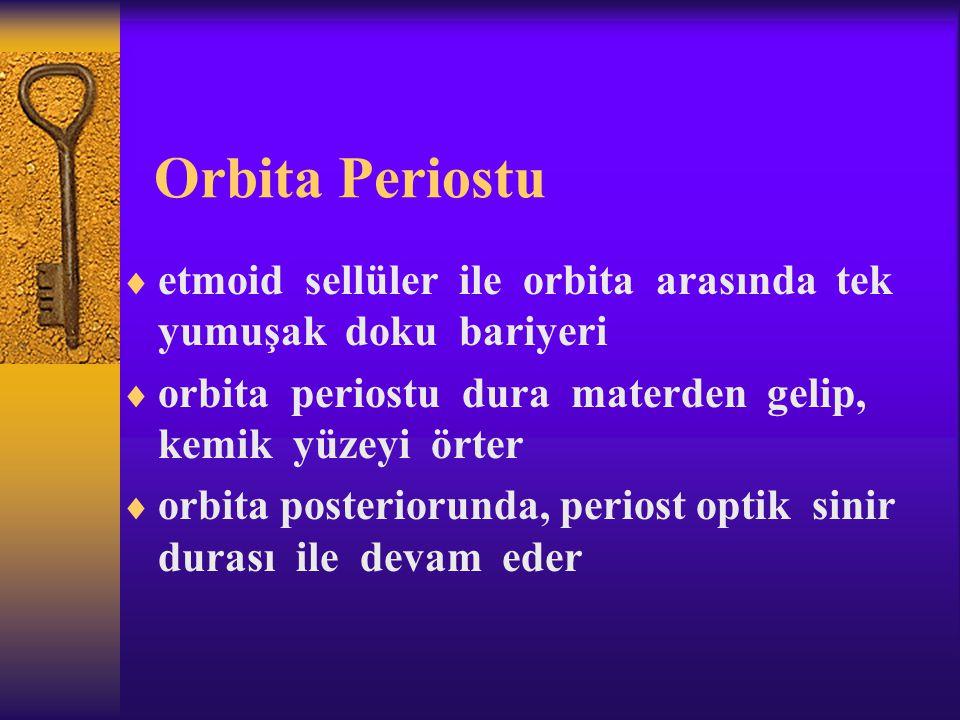 Orbita Periostu  etmoid sellüler ile orbita arasında tek yumuşak doku bariyeri  orbita periostu dura materden gelip, kemik yüzeyi örter  orbita pos