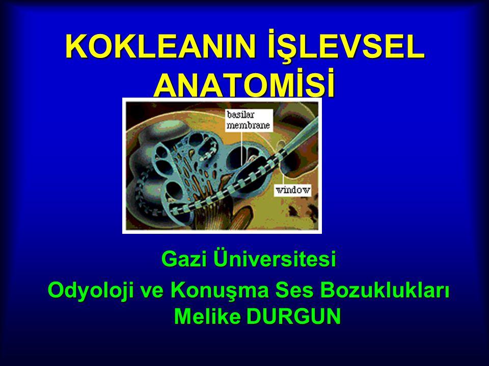 KOKLEANIN İŞLEVSEL ANATOMİSİ Gazi Üniversitesi Odyoloji ve Konuşma Ses Bozuklukları Melike DURGUN