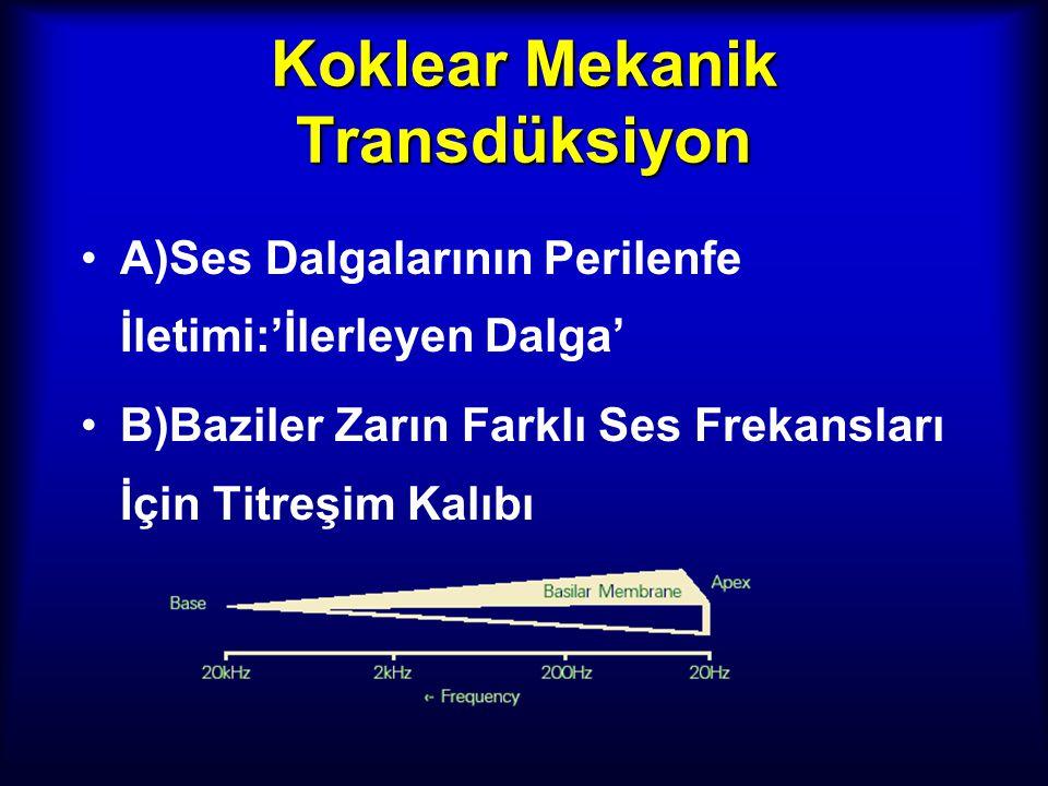 Koklear Mekanik Transdüksiyon A)Ses Dalgalarının Perilenfe İletimi:'İlerleyen Dalga' B)Baziler Zarın Farklı Ses Frekansları İçin Titreşim Kalıbı
