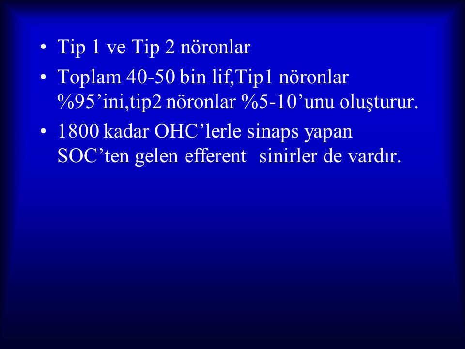 Tip 1 ve Tip 2 nöronlar Toplam 40-50 bin lif,Tip1 nöronlar %95'ini,tip2 nöronlar %5-10'unu oluşturur. 1800 kadar OHC'lerle sinaps yapan SOC'ten gelen
