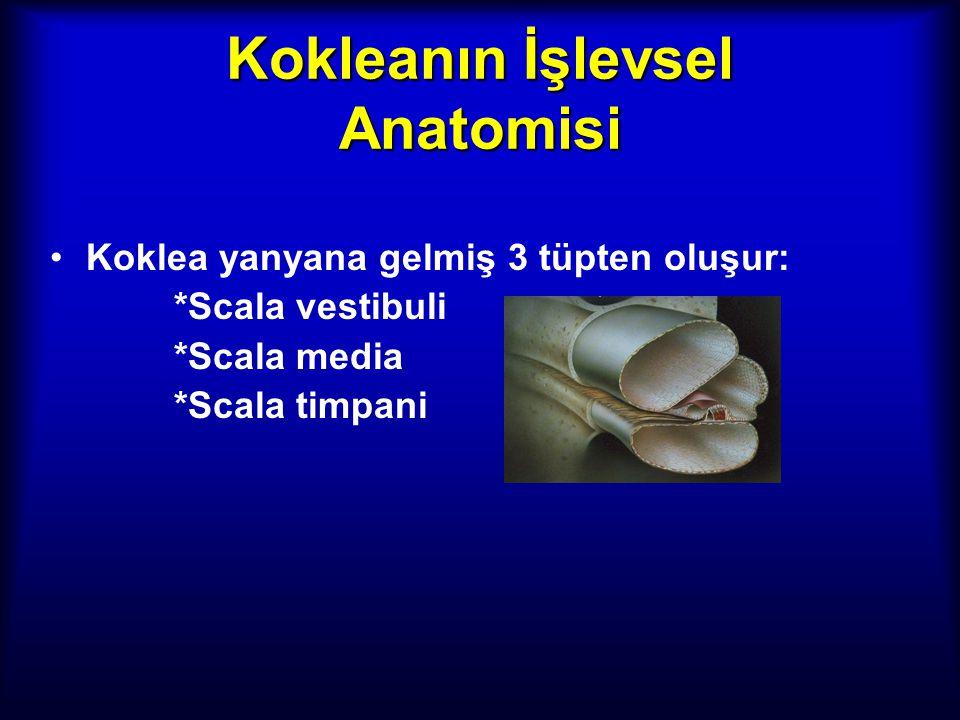 Kokleanın İşlevsel Anatomisi Koklea yanyana gelmiş 3 tüpten oluşur: *Scala vestibuli *Scala media *Scala timpani Perilenf sodyumdan endolenf potasyumd