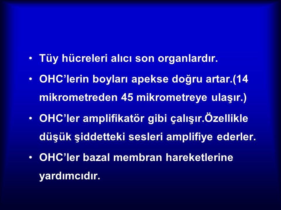 Tüy hücreleri alıcı son organlardır. OHC'lerin boyları apekse doğru artar.(14 mikrometreden 45 mikrometreye ulaşır.) OHC'ler amplifikatör gibi çalışır