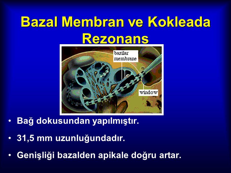 Bazal Membran ve Kokleada Rezonans Bağ dokusundan yapılmıştır. 31,5 mm uzunluğundadır. Genişliği bazalden apikale doğru artar.