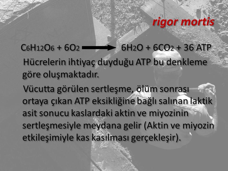 rigor mortis C 6 H 12 O 6 + 6O 2 6H 2 O + 6CO 2 + 36 ATP Hücrelerin ihtiyaç duyduğu ATP bu denkleme göre oluşmaktadır. Vücutta görülen sertleşme, ölüm