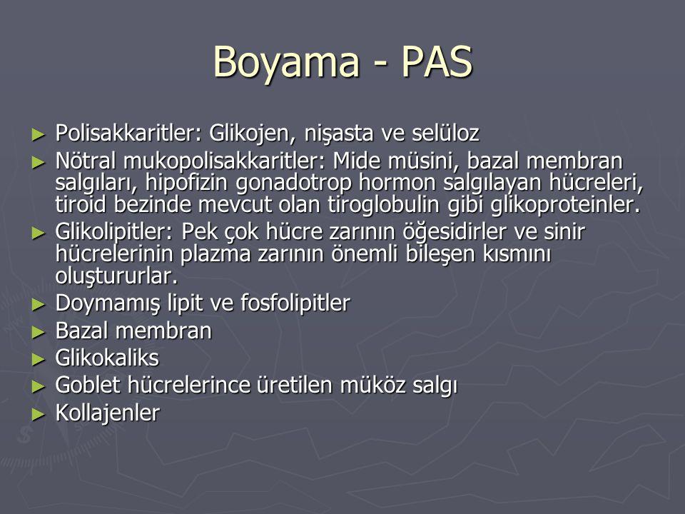 Boyama - PAS ► Polisakkaritler: Glikojen, nişasta ve selüloz ► Nötral mukopolisakkaritler: Mide müsini, bazal membran salgıları, hipofizin gonadotrop