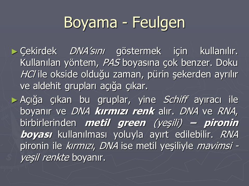 Boyama - Feulgen ► Çekirdek DNA'sını göstermek için kullanılır.