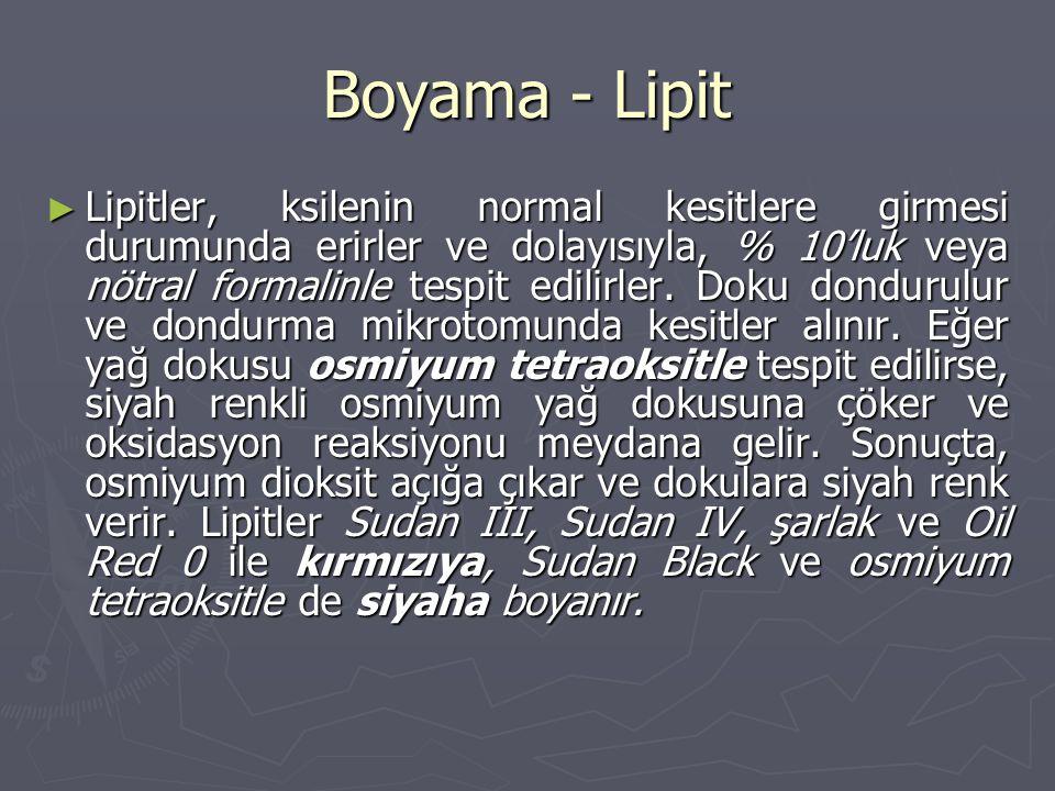 Boyama - Lipit ► Lipitler, ksilenin normal kesitlere girmesi durumunda erirler ve dolayısıyla, % 10'luk veya nötral formalinle tespit edilirler.
