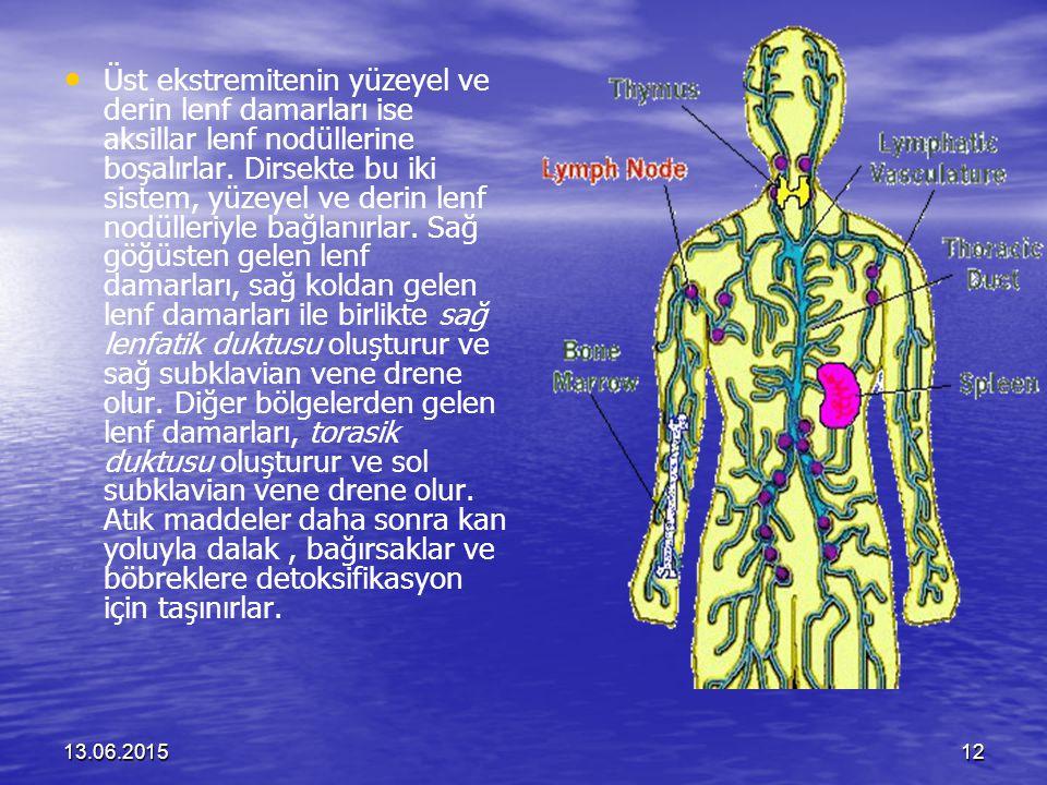 13.06.201512 Üst ekstremitenin yüzeyel ve derin lenf damarları ise aksillar lenf nodüllerine boşalırlar. Dirsekte bu iki sistem, yüzeyel ve derin lenf