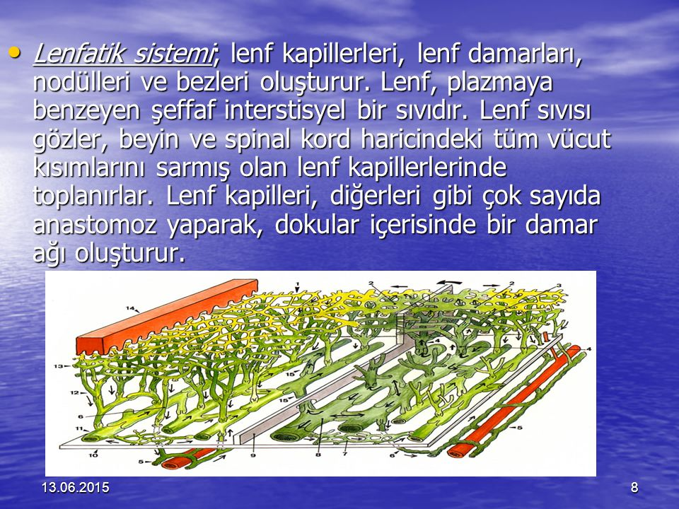13.06.20158 Lenfatik sistemi; lenf kapillerleri, lenf damarları, nodülleri ve bezleri oluşturur. Lenf, plazmaya benzeyen şeffaf interstisyel bir sıvıd