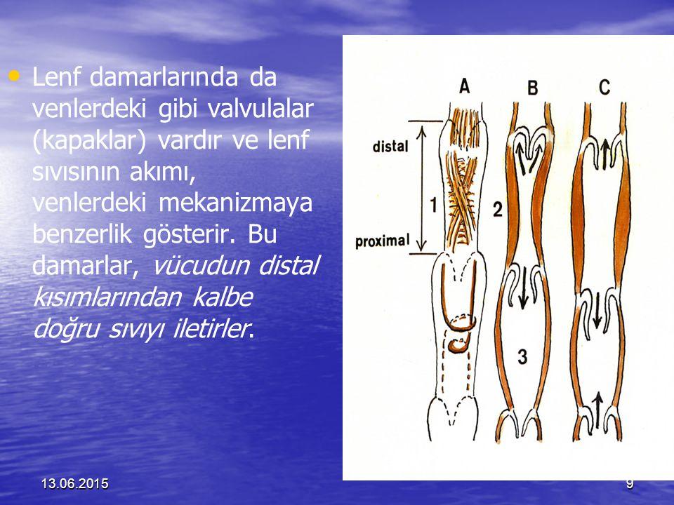 13.06.201510 Tüpler birbiri içinde birleşir ve major kanal ve damarları oluşturur.
