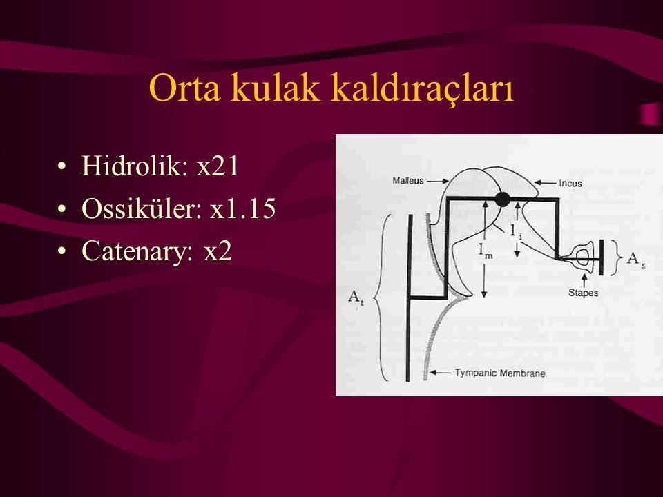Orta kulak kaldıraçları Hidrolik: x21 Ossiküler: x1.15 Catenary: x2
