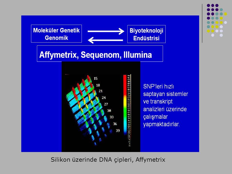 Silikon üzerinde DNA çipleri, Affymetrix