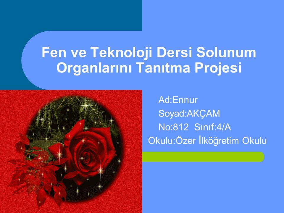 Fen ve Teknoloji Dersi Solunum Organlarını Tanıtma Projesi Ad:Ennur Soyad:AKÇAM No:812 Sınıf:4/A Okulu:Özer İlköğretim Okulu