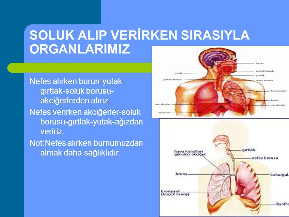 SOLUK ALIP VERİRKEN SIRASIYLA ORGANLARIMIZ Nefes alırken burun-yutak- gırtlak-soluk borusu- akciğerlerden alırız. Nefes verirken akciğerler-soluk boru