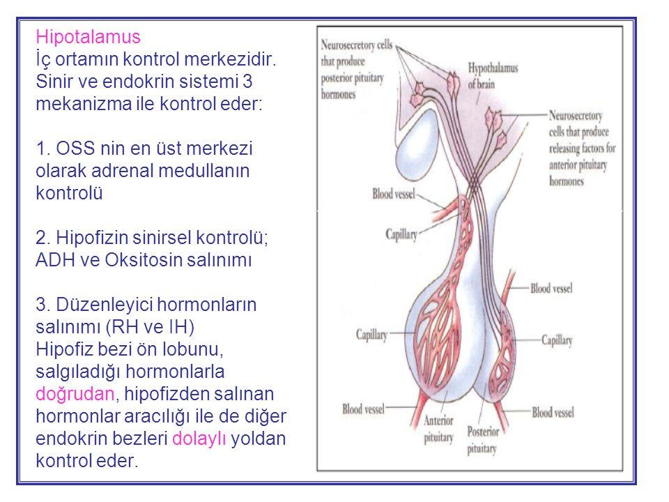Hipotalamus İç ortamın kontrol merkezidir.