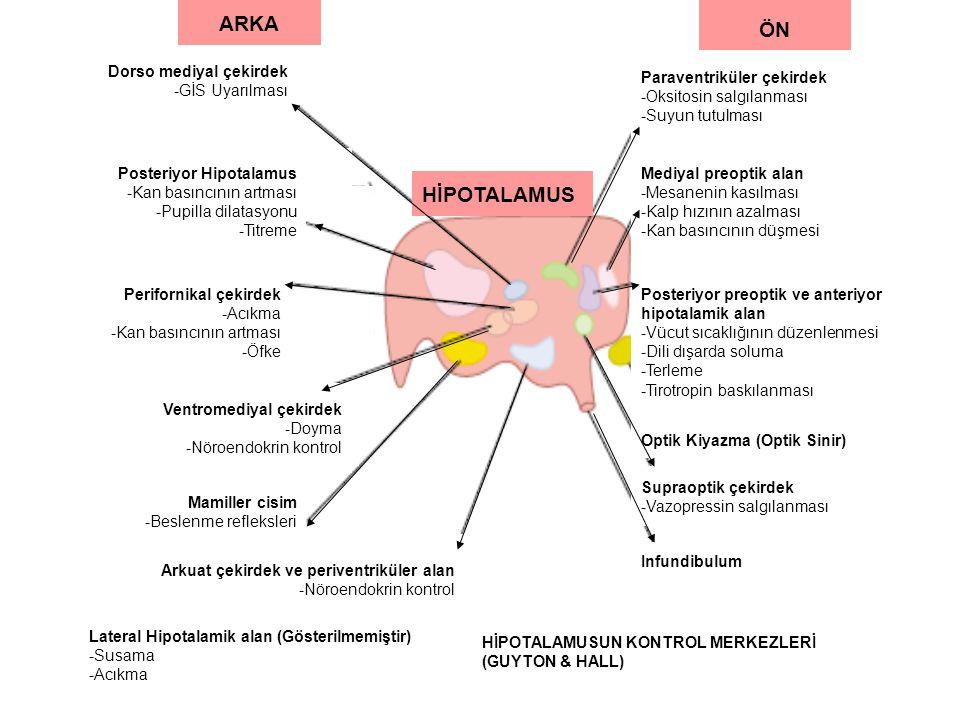 ARKA ÖN Dorso mediyal çekirdek -GİS Uyarılması Posteriyor Hipotalamus -Kan basıncının artması -Pupilla dilatasyonu -Titreme Perifornikal çekirdek -Acıkma -Kan basıncının artması -Öfke Arkuat çekirdek ve periventriküler alan -Nöroendokrin kontrol Mamiller cisim -Beslenme refleksleri Ventromediyal çekirdek -Doyma -Nöroendokrin kontrol Lateral Hipotalamik alan (Gösterilmemiştir) -Susama -Acıkma Paraventriküler çekirdek -Oksitosin salgılanması -Suyun tutulması Mediyal preoptik alan -Mesanenin kasılması -Kalp hızının azalması -Kan basıncının düşmesi Posteriyor preoptik ve anteriyor hipotalamik alan -Vücut sıcaklığının düzenlenmesi -Dili dışarda soluma -Terleme -Tirotropin baskılanması Optik Kiyazma (Optik Sinir) Supraoptik çekirdek -Vazopressin salgılanması Infundibulum HİPOTALAMUSUN KONTROL MERKEZLERİ (GUYTON & HALL) HİPOTALAMUS