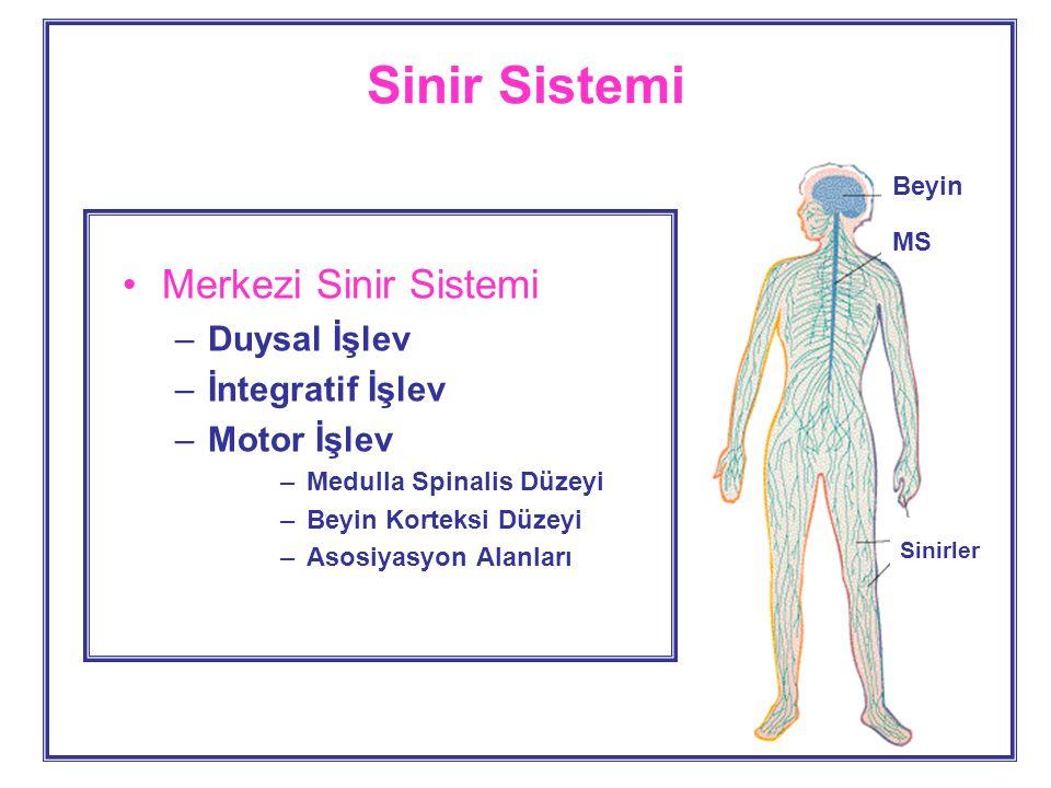 Sinir Sistemi Merkezi Sinir Sistemi –Duysal İşlev –İntegratif İşlev –Motor İşlev –Medulla Spinalis Düzeyi –Beyin Korteksi Düzeyi –Asosiyasyon Alanları Beyin MS Sinirler